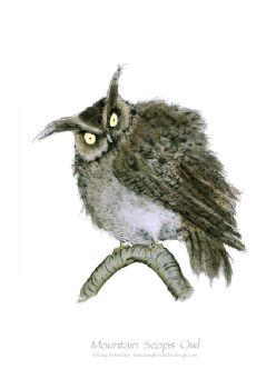 Mountain Scops Owl - signed print